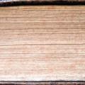 1649-tranche-jaspee